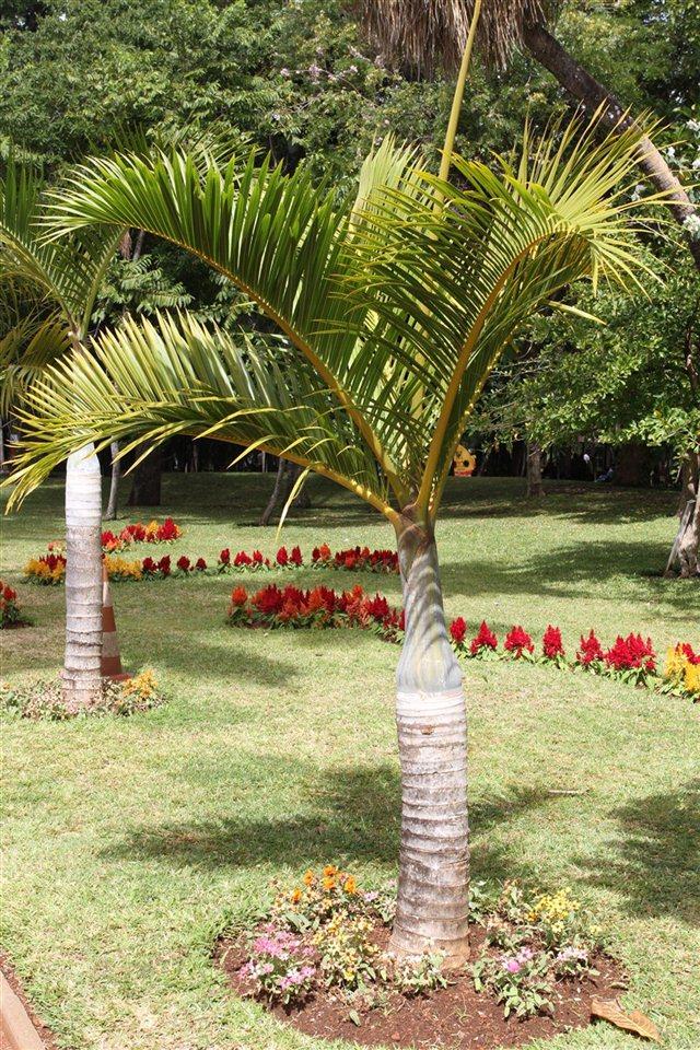 Xander 39 s web mes grr2 et grr1 aout 2012 saint denis baleines - Petit jardin en pot saint denis ...